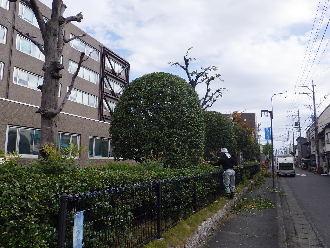 合庁植栽剪定⑦.JPG