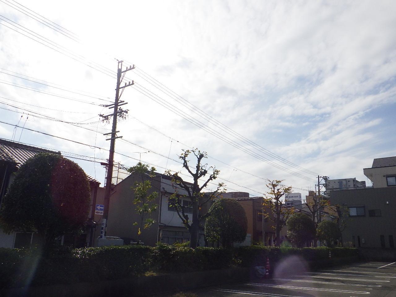 合庁植栽剪定⑪.JPG